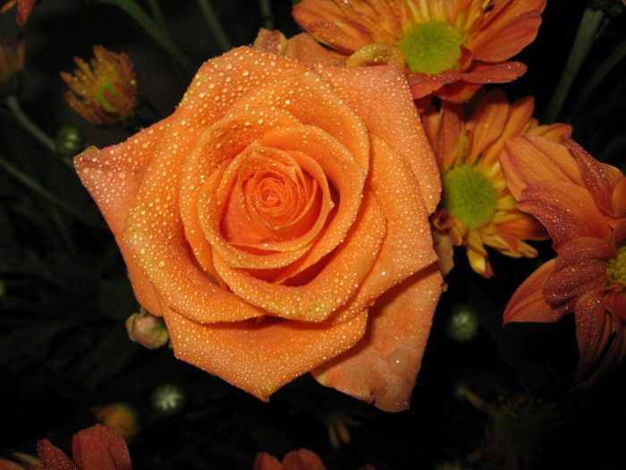 rosas mamey
