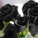 ramo de rosas negras