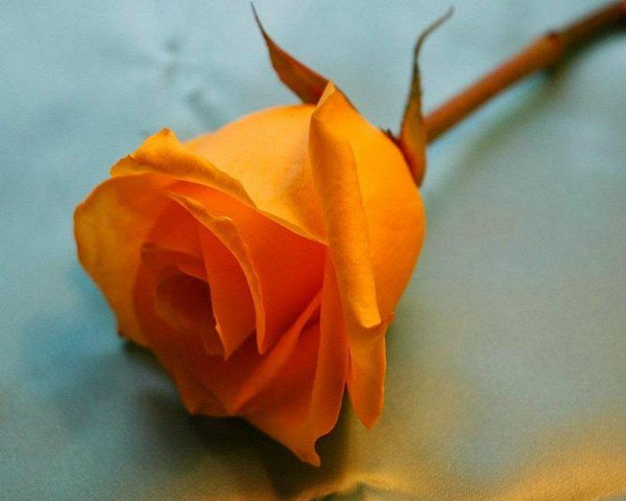 flores anaranjadas significado