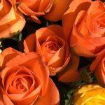 ramo de rosas anaranjadas