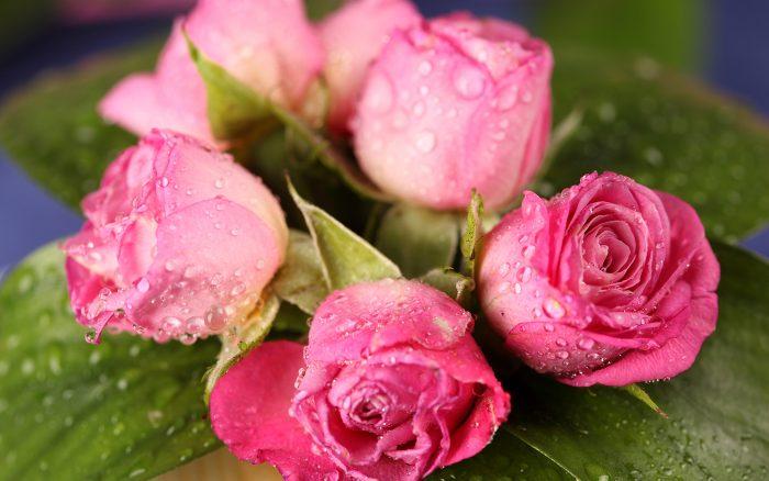ramo de rosas fucsias
