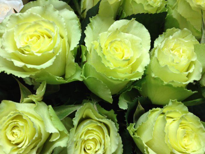 imagenes de flores verdes hermosas