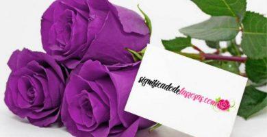 significado de las rosas moradas