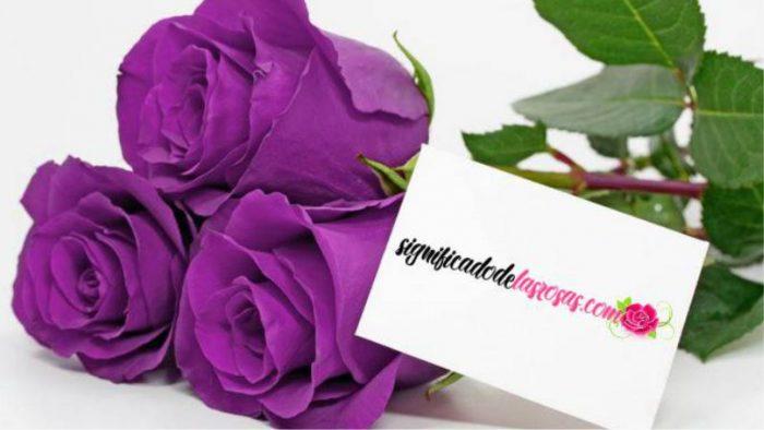 Significado De Las Rosas Moradas Más Hermosas Del Mundo