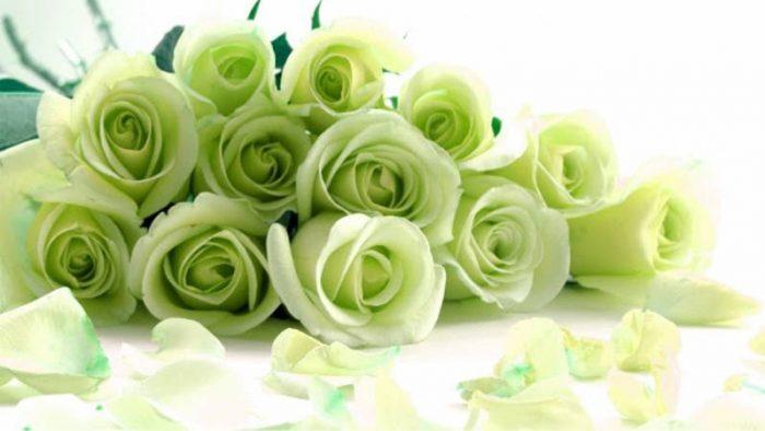 que significan las rosas verdes