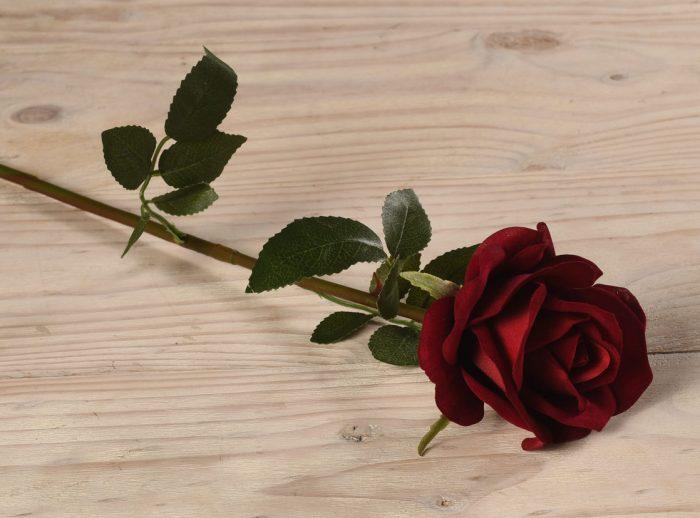 rosa roja sola